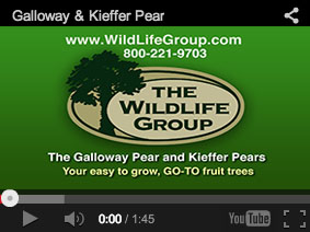 the_wildlife_group_pear_video