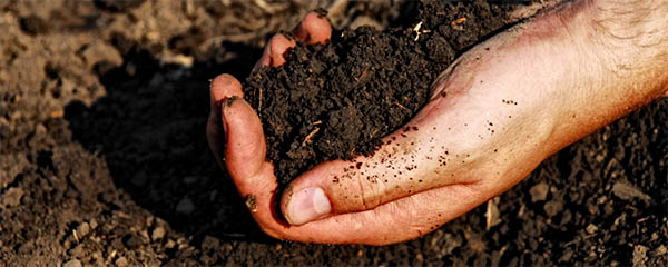 the_wildlife_groups_soil_types